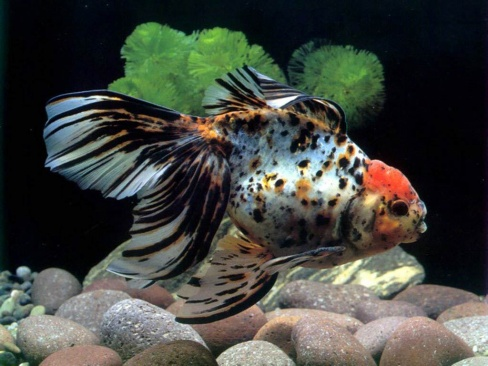 Секрет аквариумной рыбки