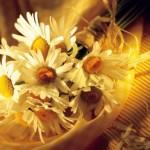 Какие цветы кому стоить дарить?