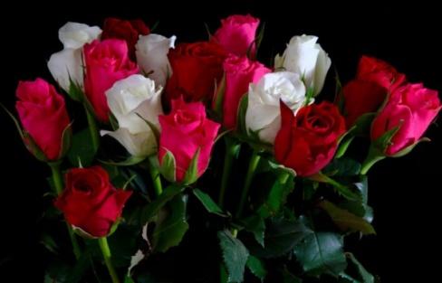 Какие розы подарить?