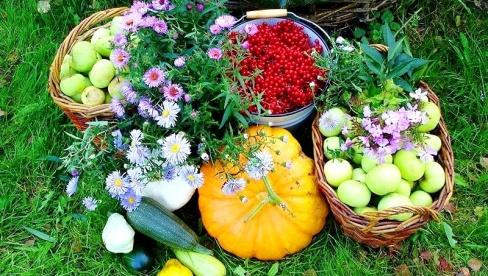 Садоводство. Правила и советы