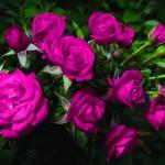 10 советов, как сохранить дольше срезанные цветы