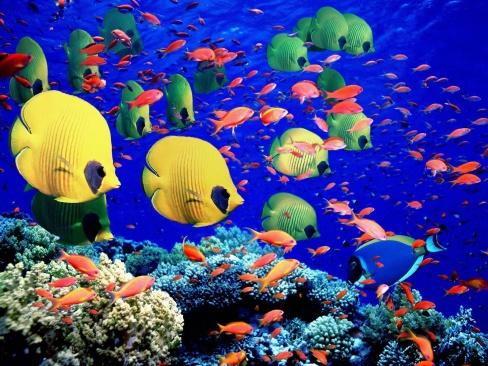 Как подобрать аквариум для лабиринтовых рыбок
